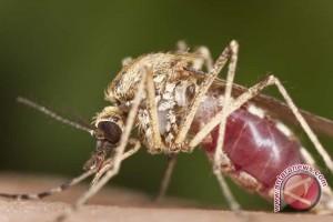 Kotabaru Dukung Kalsel Bebas Malaria 2020