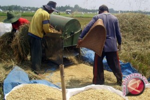 Petani Tabalong Dapat Bantuan Benih Padi Gratis