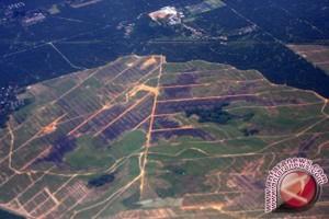 Kerusakan Lahan Tanah Laut 90 Ribu Hektare
