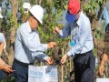 BUMN to Plant 10,000 Mangroves in South Kalimantan