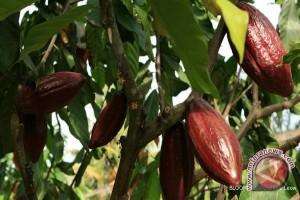 Pemkab Banjar Siap Buka Perkebunan Kakao