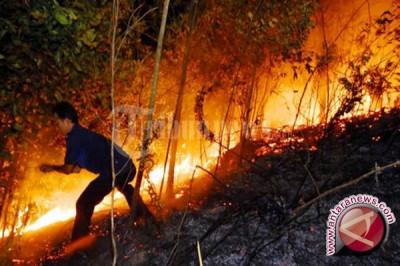 Kebakaran Hutan Dan Lahan Tabalong Kian Marak