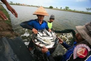 Tingkatkan Sektor Perikanan Melalui Permodalan