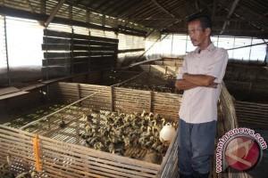Banjir Ganggu Produktivitas Ternak