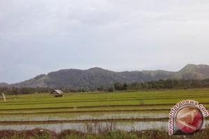 HSS Cetak Sawah 500 Hektare
