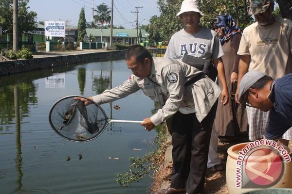 Pemkab Gandeng Swasta Kembangkan Ikan Betok