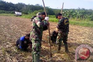 Koramil 1001-04 Batumandi Kembangkan Tanaman Jagung