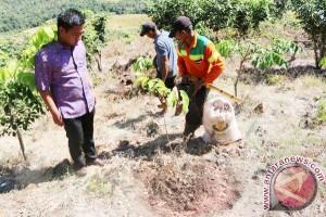 Tala Tanam Pohon Gaharu 70 Hektare