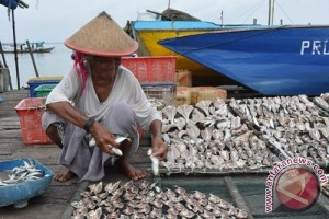 DKP Kotabaru Targetkan Produksi Ikan 91.773 Ton