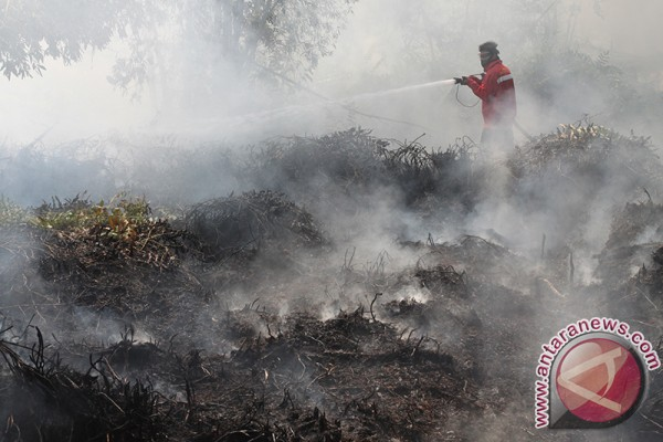 Hundreds of hectares land burns in Tanah Laut