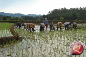 Tabalong Target Cetak Sawah Baru 472,5 Hektare