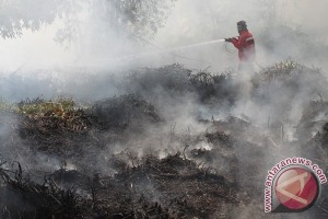 4.5 hectare land on fire in Kotabaru