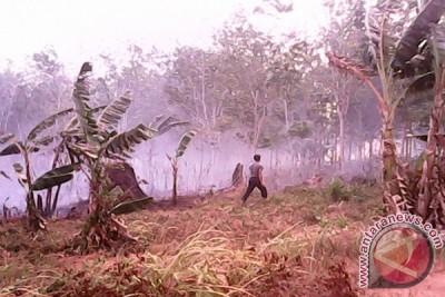 BPBD Kotabaru Berhasil Padamkan Api Di Perkebunan