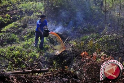 Kebakaran Tahura Sultan Adam Capai 700 Hektare