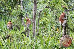 Pertamina Dukung Konservasi Bekantan Di Pulau Bakut