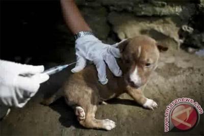 Dinkes Buru Kelompok Anjing Gila