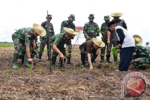 Kotabaru and TNI Planting Corn