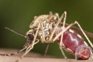 Di Tabalong Angka Kesakitan Malaria Turun