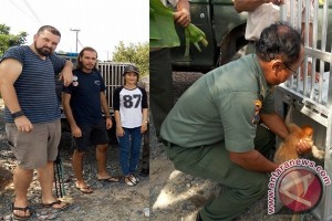 Bekantan Kebun Binantang Surabaya Dikembalikan ke Habibat