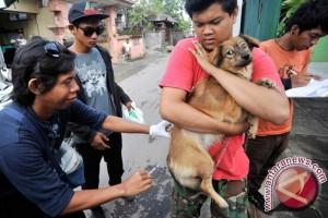 Dinkes Temukan 22 Kasus Gigitan Hewan Pembawa Rabies