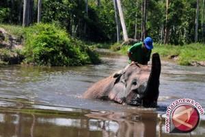 Pengunjung Lembah Hijau Minati Wahana Gajah Tunggang