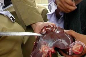 Distankanhut Find No Heartworms on Cattle