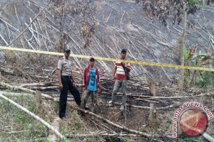 Lagi Pembakar Lahan Diamankan Polisi
