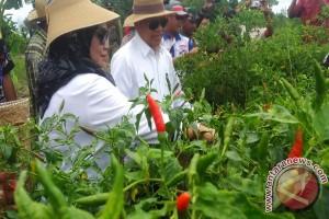Tapin Develops Hottest Chili