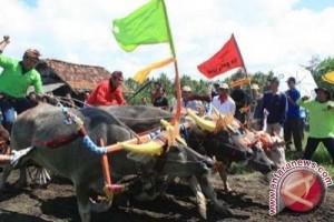 Pacuan Kerbau Makepung Jembrana Dibuatkan Sirkuit Permanen