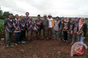 BP3K Kunjungi Kebun Sentra Jagung Tala