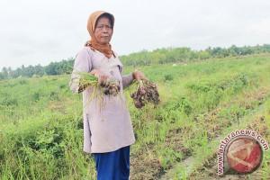 DPRD Bahas Raperda Perlindungan Lahan Pertanian