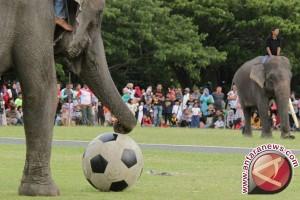Pemain PSIS Dipulihkan Dari Sepak Bola Gajah