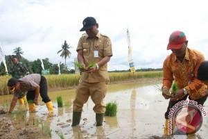 "Legislator : Kalsel Memungkinkan Kembangkan Varietas Padi ""GSR"""