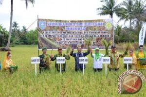 Harga Gabah Petani Di HSS Masih Normal