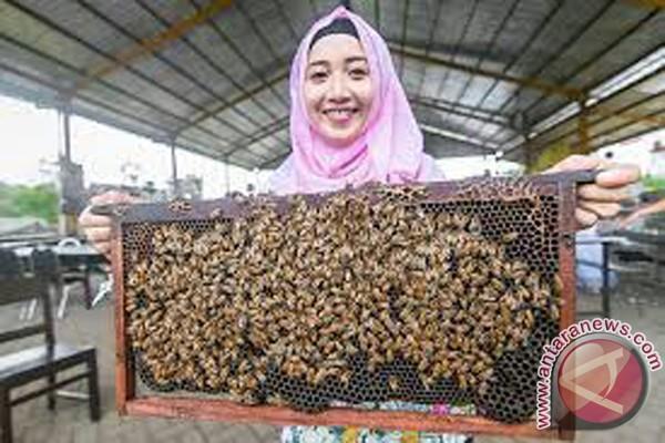Padangpariaman Perkuat Pariwisata Dengan Budidaya Lebah Madu