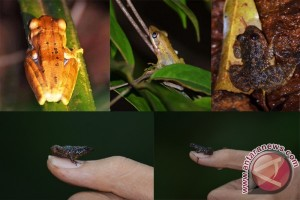 Biodiversity to build frog conservation area