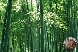 Tapin plants ex mining with bamboo