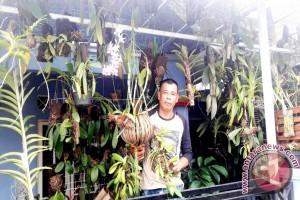 Fahmi Koleksi 500 Jenis Tanaman Anggrek