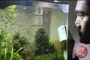 Warga Rantau Lestarikan Ikan Endemik Kalimantan