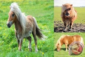 GL Zoo Datangkan Kuda Poni Sambut Lebaran