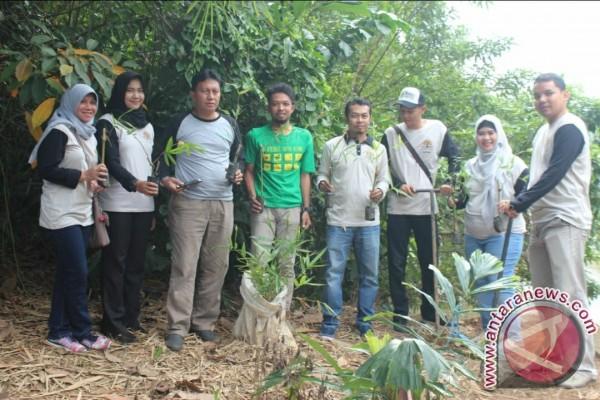Bantaran Sungai Tapin Ditanami Bambu
