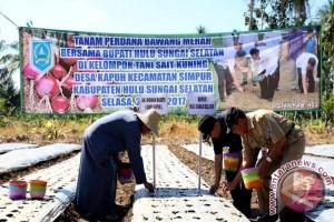 HSS Dibantu APBN Perluasan Areal Bawang Merah 40 Hektar