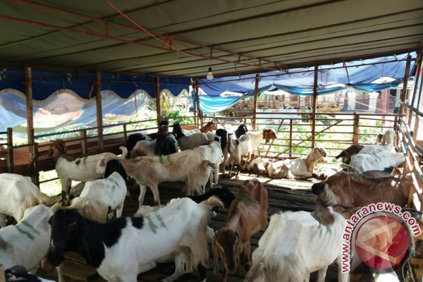 Tapin Ready to Cultivate Superior Goats