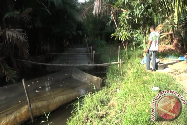 Petani Budidaya Ikan Lele di Lahan Rawa