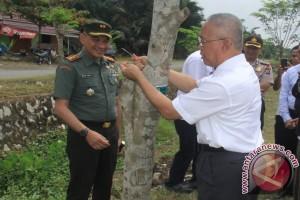 Pohon-Pohon Angsana Teduhi Jalan Lingkar Walangsi-Kapar