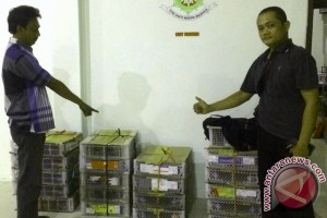 Polsek Gagalkan Penyelundupan 219 Ekor Unggas Ke Surabaya