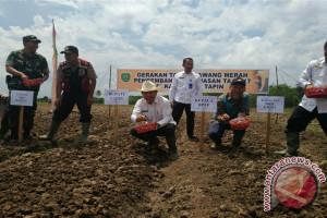 13 Petani Tala Belajar Pertanian Bawang Merah Di Tapin