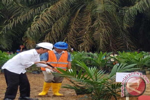 Presiden: Keluarkan Kebun Petani dari Kawasan Hutan