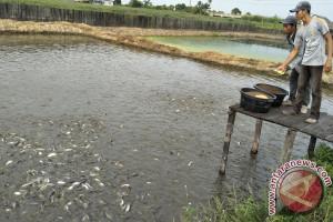 Usaha Ikan Patin Menguntungkan