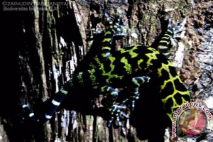 Biodiversitas Temukan Binatang Amphibi